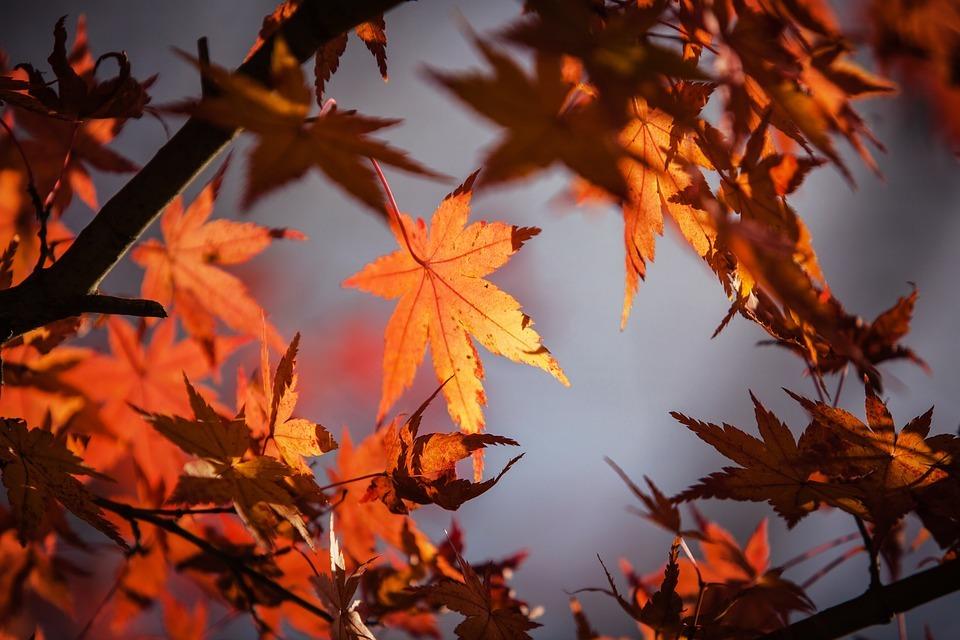 秋冬生地の定番「フランネル」「サキソニー」「メルトン」「ツイード」を知る