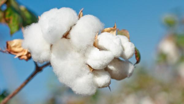綿、麻素材について